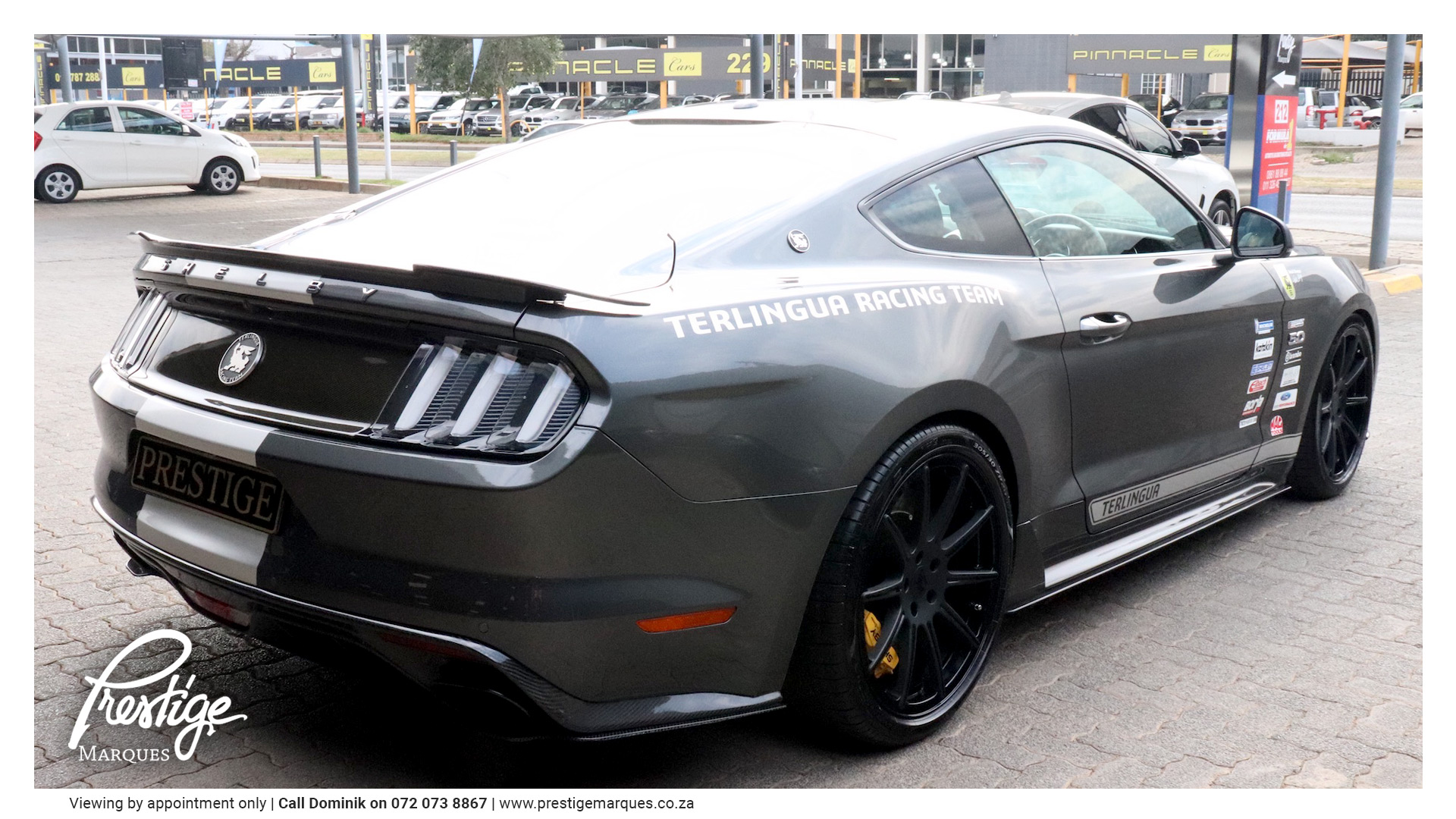 Prestige Marques   Shelby Ford Mustang Terlingua Racing Team